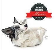 Homöopathie für erwachsene Hunde