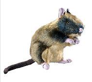 Tackenberg - Jörnie, die Ratte [6052044538] 1 Stk