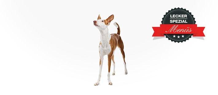 Barf Menü für dünne Hunde mit grünem Pansen 15 Artikel