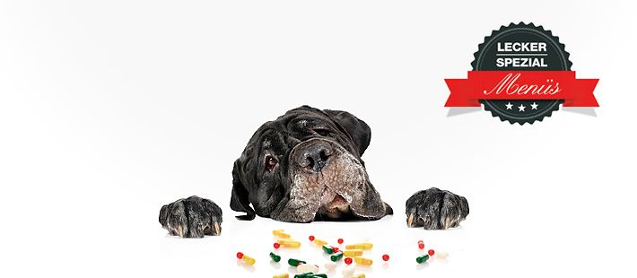 Barf Menü für allergische Hunde mit Pferd und Kartoffeln 29 Artikel