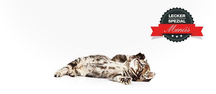 Barf Menü für Katzen mit Rinderherz 28 Artikel