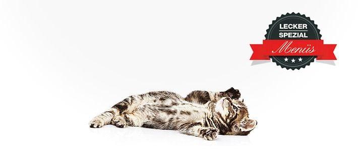 Barf Menü für Katzen mit Pferdefleisch 28 Artikel