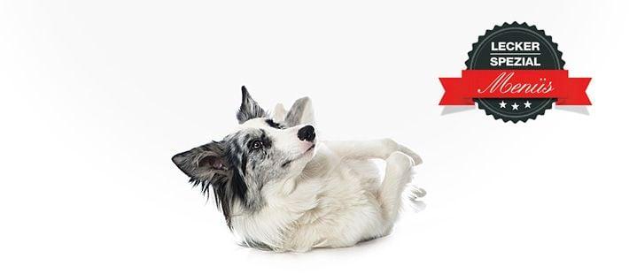 Barf Menü für erwachsene Hunde mit Rindergulasch 14 Artikel