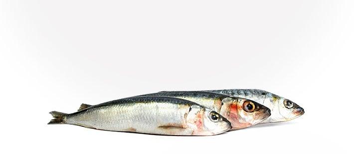 Sardinen 500 g