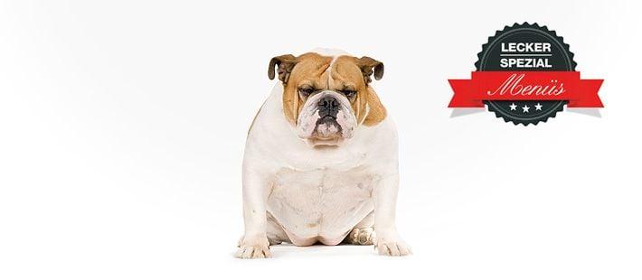 Barf Menü für dicke Hunde mit Rindergulasch 15 Artikel