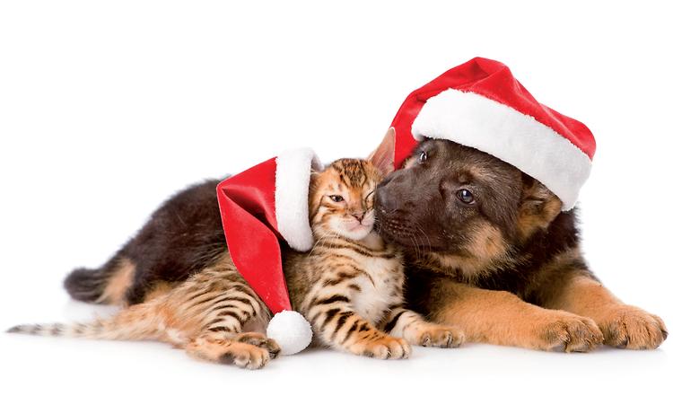 tipps f r gl ckliche weihnachten mit hund katze. Black Bedroom Furniture Sets. Home Design Ideas