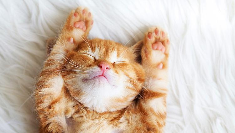 BARF für Kitten